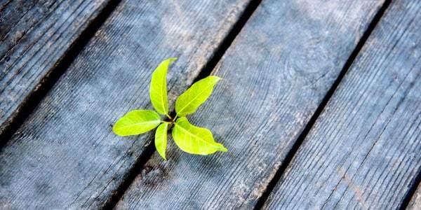 idee-wachsen-pflanze