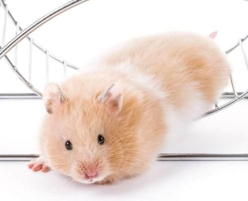 physio-hamsterrad-raus